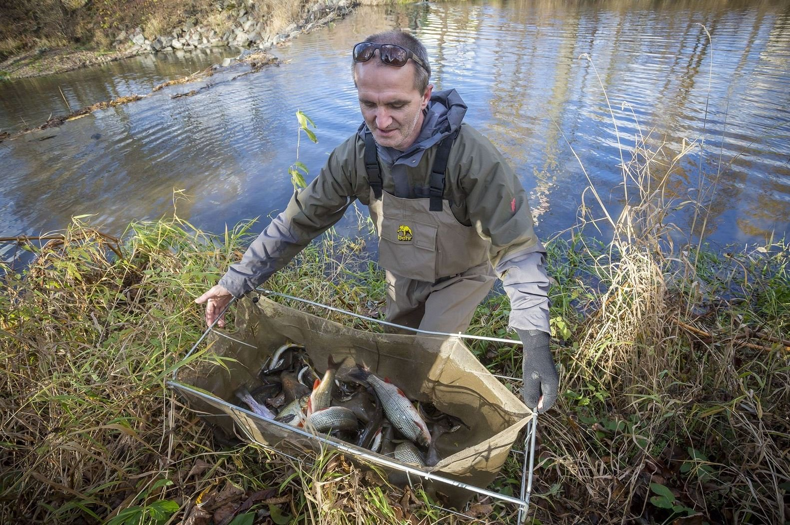 Informace z elektronických médií: V Bečvě ubývá ryb, stěžují si rybáři. Návrat k přírodní řece bude drahý