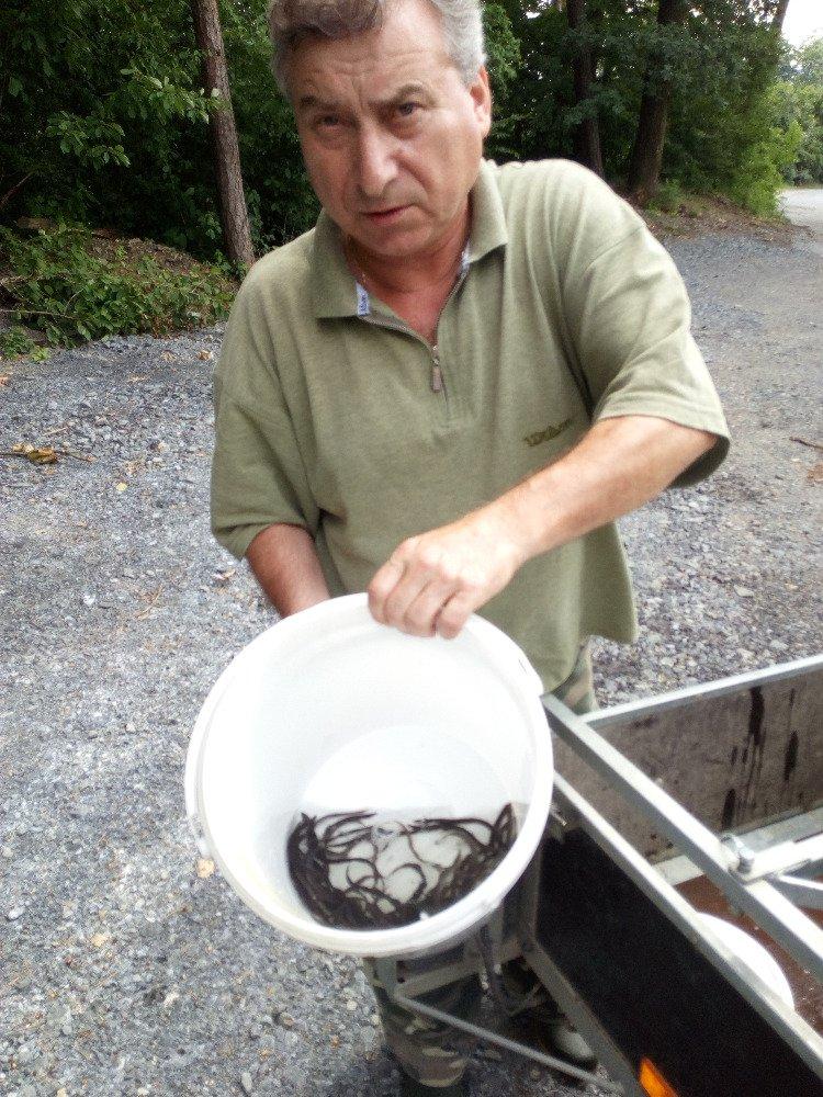 Výsadba kapra, candáta a úhoře do našich revírů v měsíci červnu 2018